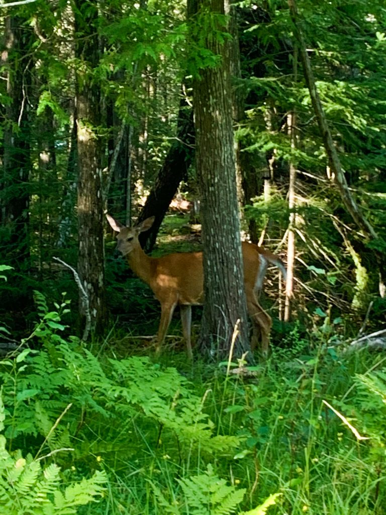 best places to visit in upper peninsula michigan: Drummond Island wildlife