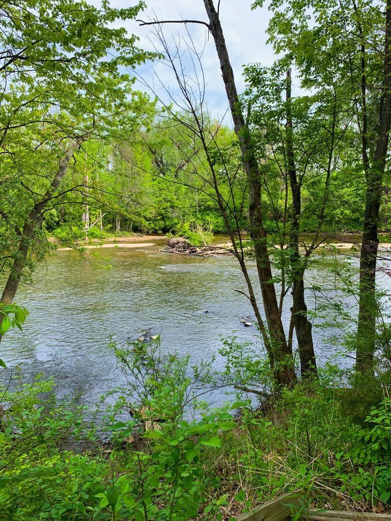 Parks in Ann Arbor: A quiet spot near the Huron River in the Arb, Nichols Arboretum