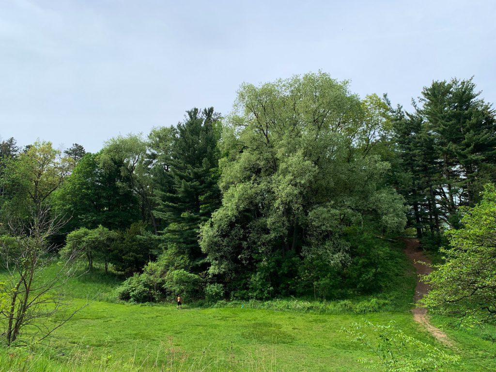 Parks in Ann Arbor: Nichols Arboretum