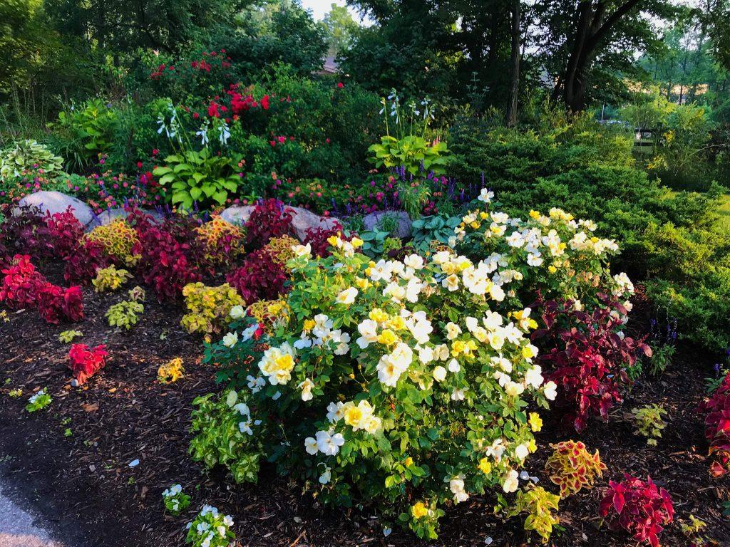 Parks in Ann Arbor: County Farm Park flowers