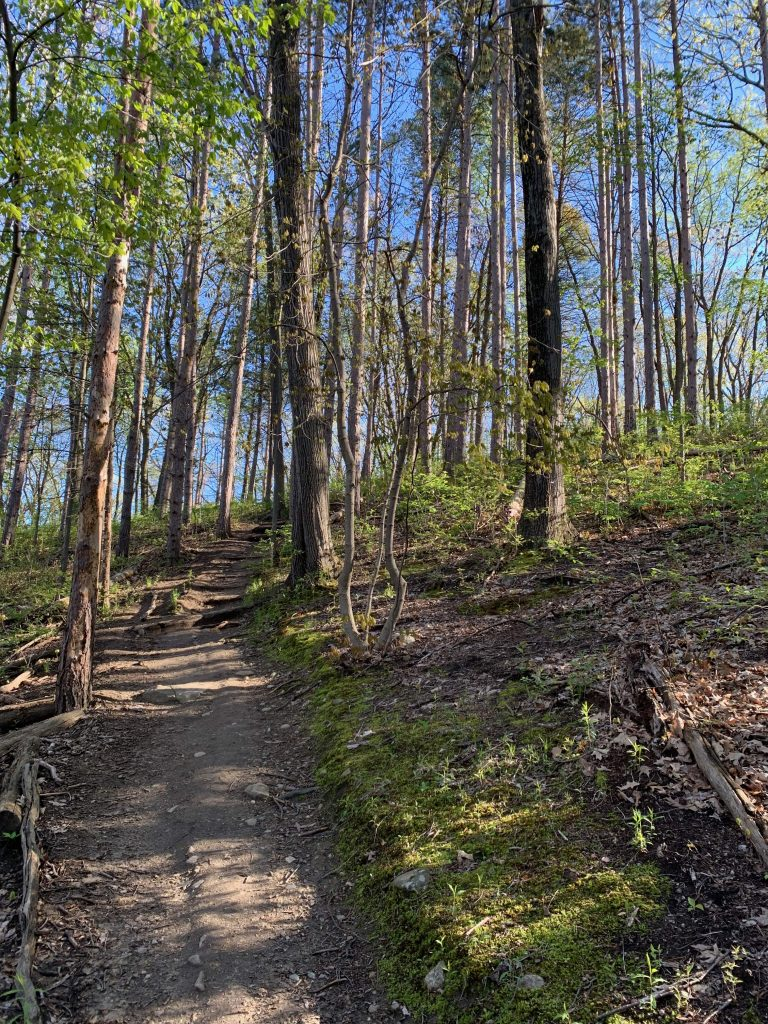 Parks in Ann Arbor: The beautiful Bird Hills Nature Area