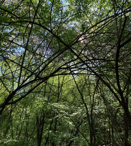 Parks in Ann Arbor: 8 Favorite City Spots to Get a Nature Fix
