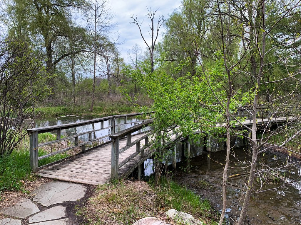 Parks in Ann Arbor: a nature trail at Matthei Botanical Gardens