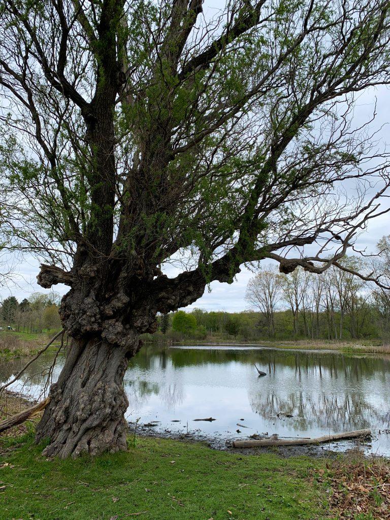 Parks in Ann Arbor: Matthei Botanic Gardens