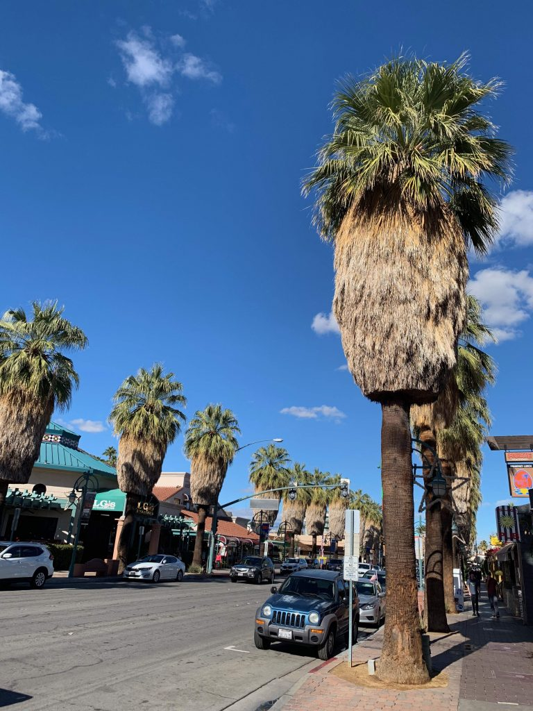 Palm Springs, with its unique hula skirt trees