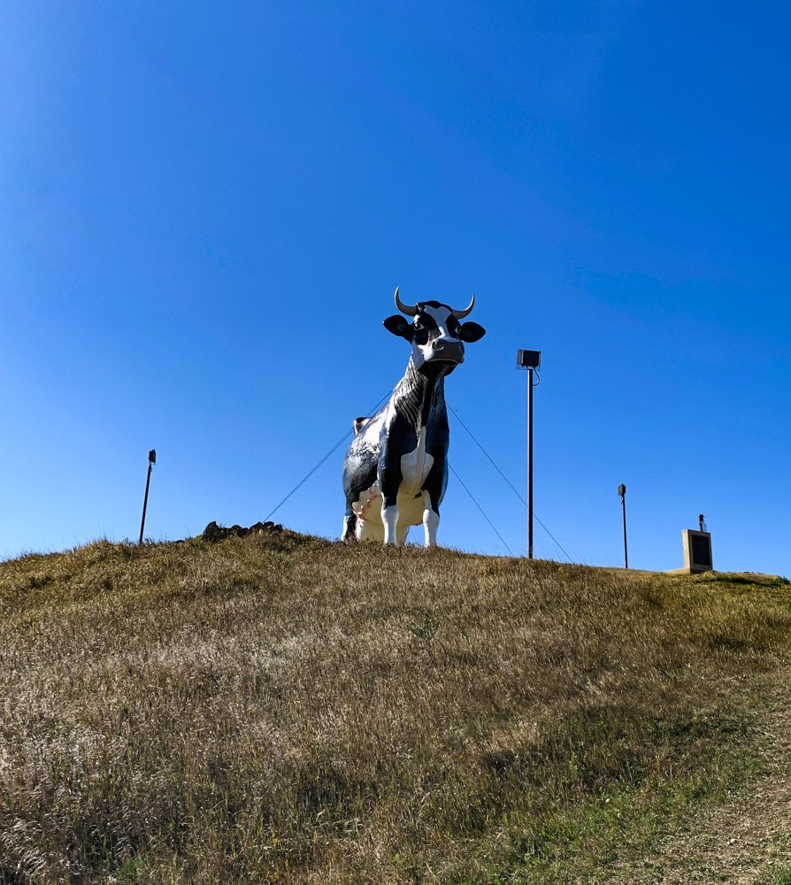 a massive concrete sculpture of a black and white Holstein cow, Salem Sue, stands atop a hill covered with dried prarie grass in Salem, North Dakota